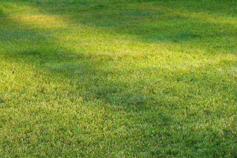 Campo de grama com pontos da luz solar foto de stock