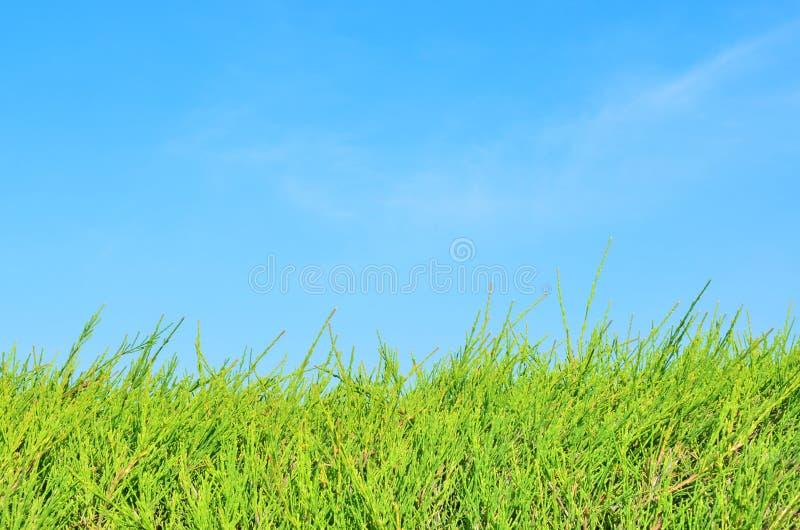 Campo de grama e céu azul foto de stock
