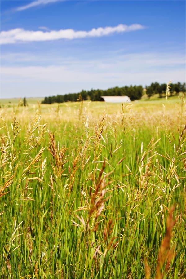 Campo de grama rural com celeiro do fundo imagem de stock royalty free