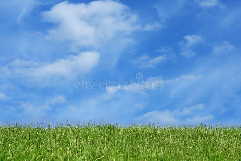 Campo de grama sobre o céu azul fotos de stock
