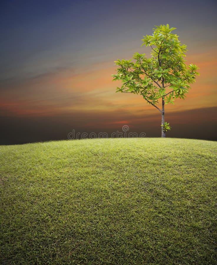 Campo de grama verde com a árvore sobre o céu do por do sol imagem de stock royalty free