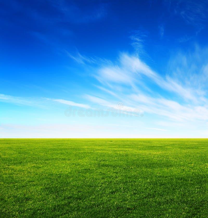 Campo de grama verde e céu azul brilhante foto de stock