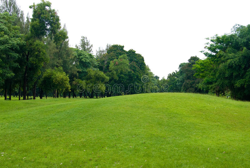 Campo de grama verde no jardim imagens de stock royalty free