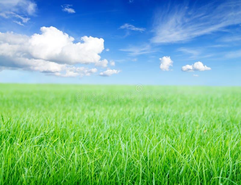 Campo de grama verde sob o sol do meio-dia no céu azul. fotografia de stock