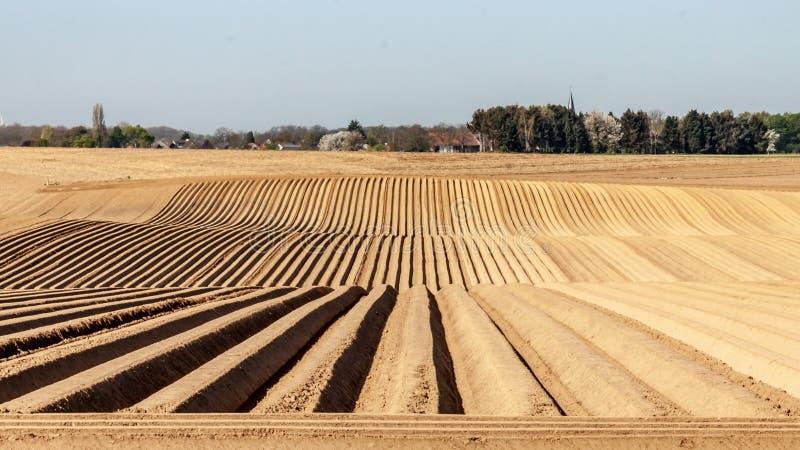Campo de granja con el suelo preparado con filas en la cola para el establecimiento de las patatas imagenes de archivo