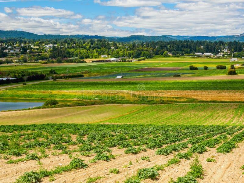 Campo de granja con la cosecha vegetal plantada recientemente fotografía de archivo