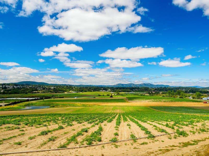 Campo de granja con la cosecha vegetal plantada recientemente imágenes de archivo libres de regalías