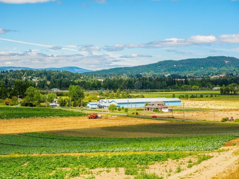 Campo de granja con la cosecha vegetal plantada recientemente fotografía de archivo libre de regalías