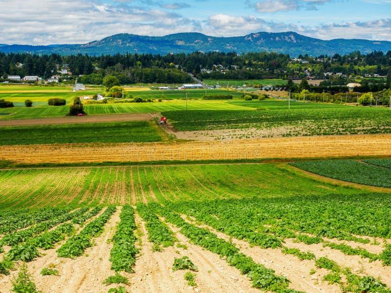 Campo de granja con la cosecha vegetal plantada recientemente foto de archivo libre de regalías