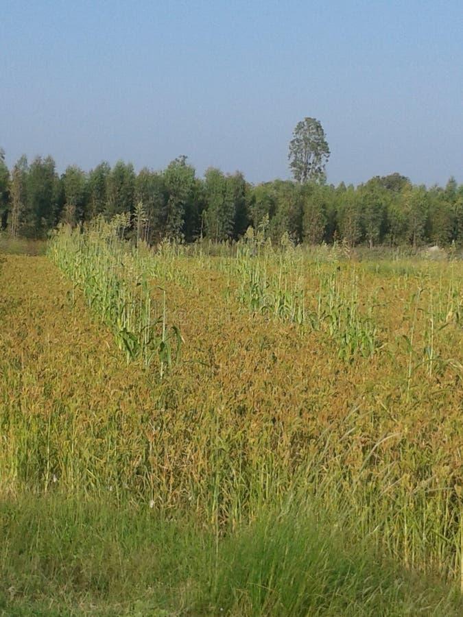 Campo de granja verde foto de archivo libre de regalías