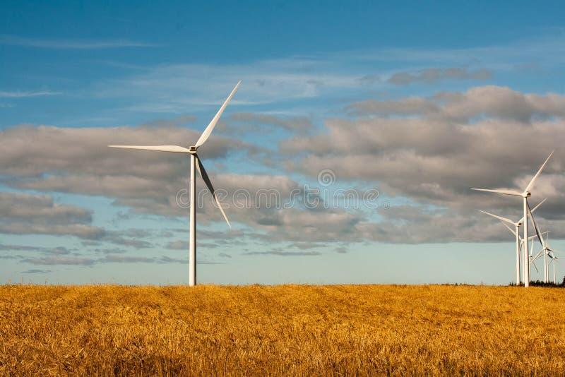 Campo de grano con los molinoes de viento fotos de archivo