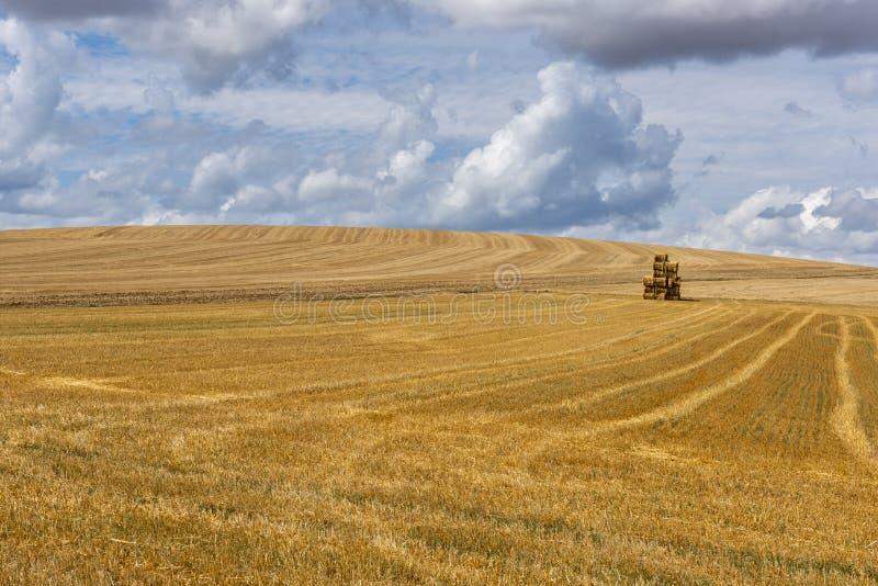 Campo de grano segado Auxerre Francia foto de archivo libre de regalías