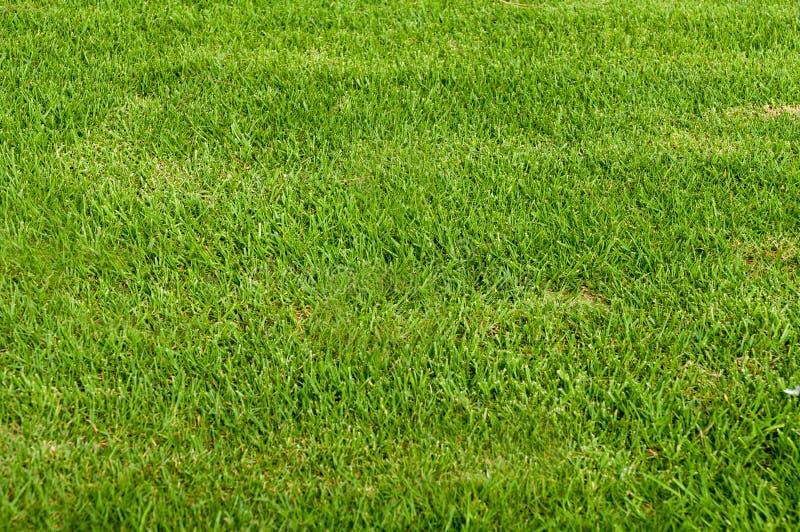 Campo de hierba imagen de archivo