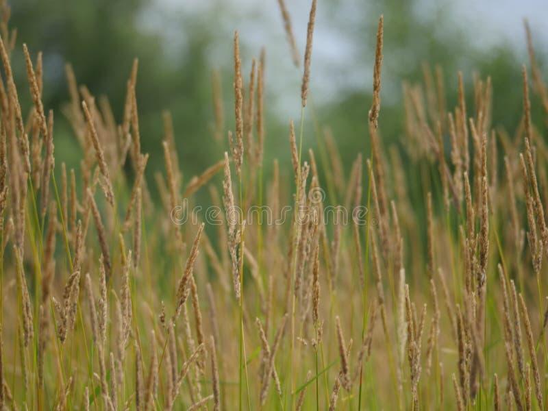 Campo de hierba imagenes de archivo