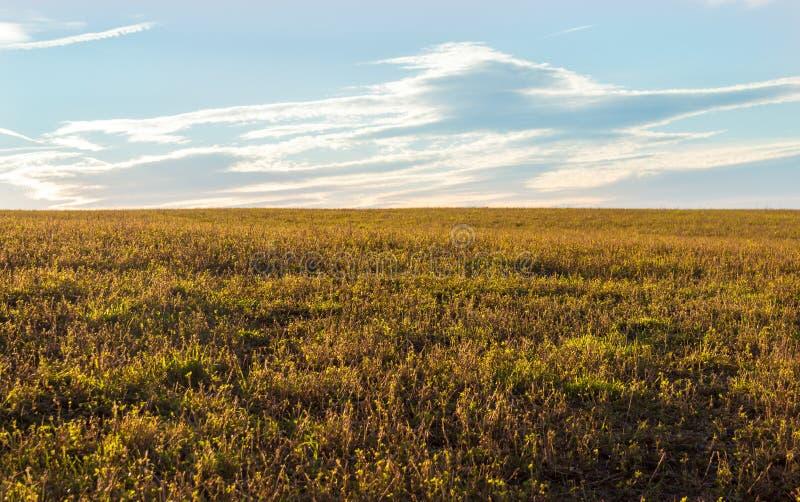 Campo de hierba con el cielo azul fotografía de archivo libre de regalías