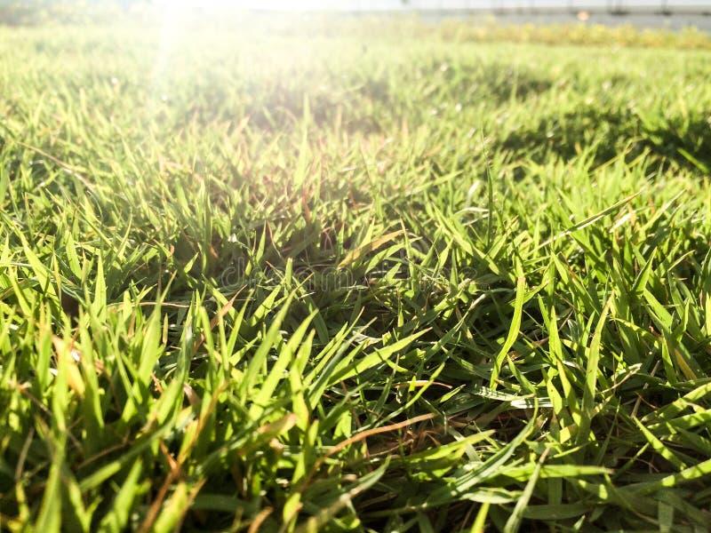 Campo de hierba en el último piso del edificio verde por mañana fotografía de archivo