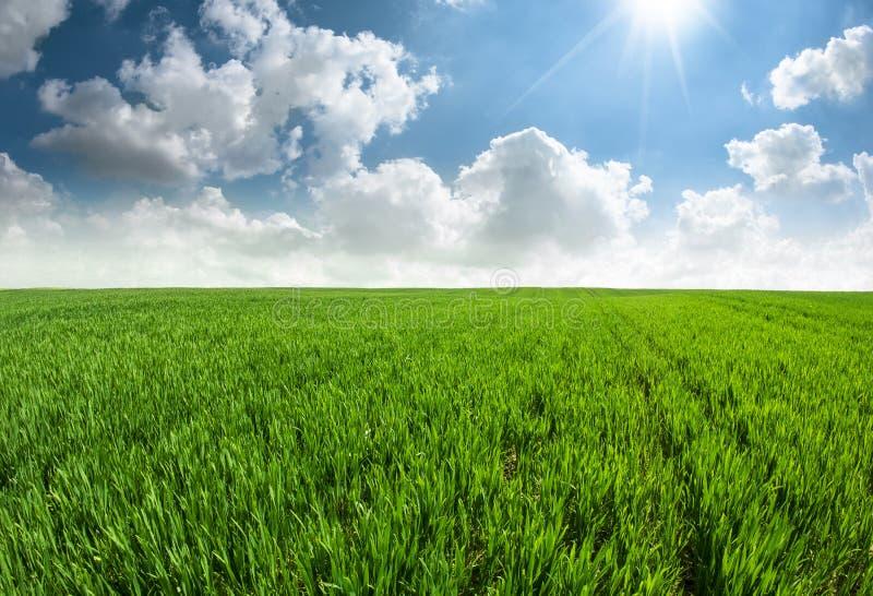 Campo de hierba fresco hermoso con el cielo azul imágenes de archivo libres de regalías