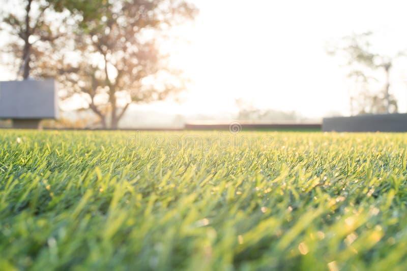 Campo de hierba suave del foco en la luz del sol de oro de la mañana foto de archivo