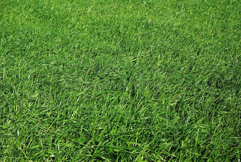 Campo de hierba verde fotografía de archivo