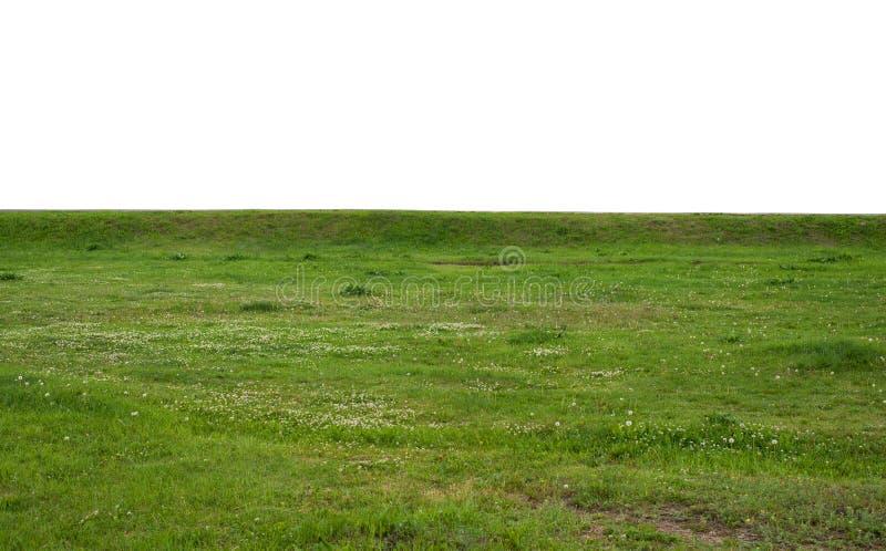 Campo de hierba verde aislado en el fondo blanco fotografía de archivo