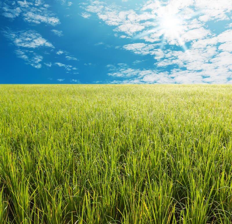 Campo de hierba verde con el cielo azul brillante imagenes de archivo