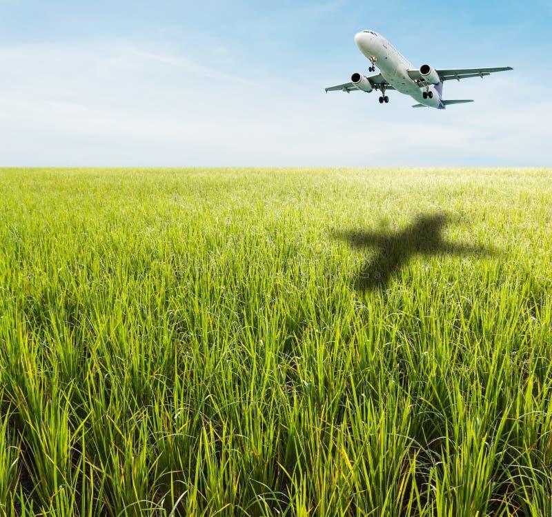 Campo de hierba verde con el cielo azul brillante fotos de archivo libres de regalías