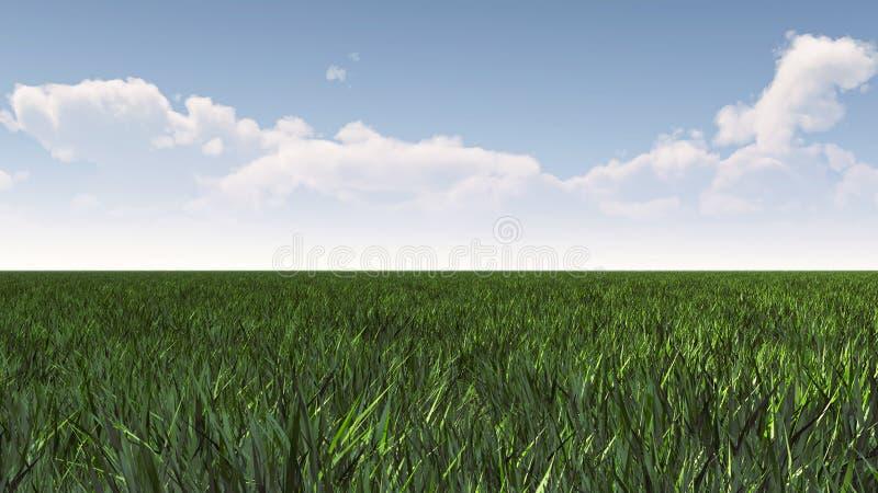 Campo de hierba verde debajo del cielo azul imagenes de archivo