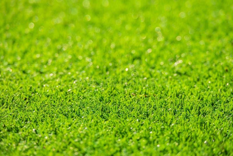 Campo de hierba verde, fondo verde natural de la falta de definición fotografía de archivo libre de regalías
