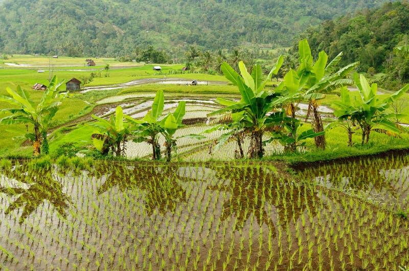 Campo de Indonesia en la isla de Sumatra imágenes de archivo libres de regalías