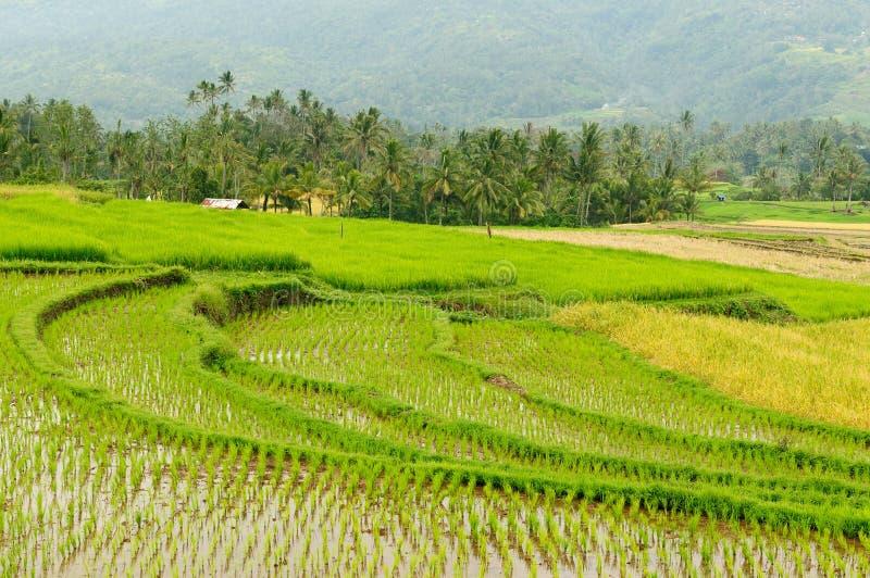 Campo de Indonesia en la isla de Sumatra imagen de archivo