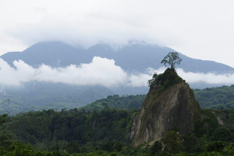 Campo de Indonesia en la isla de Sumatra imagenes de archivo