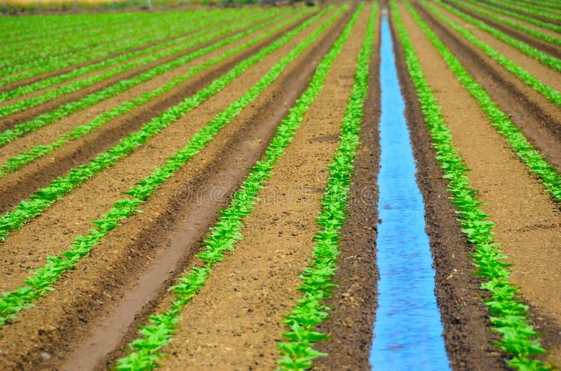 Campo de irrigação das colheitas imagens de stock royalty free