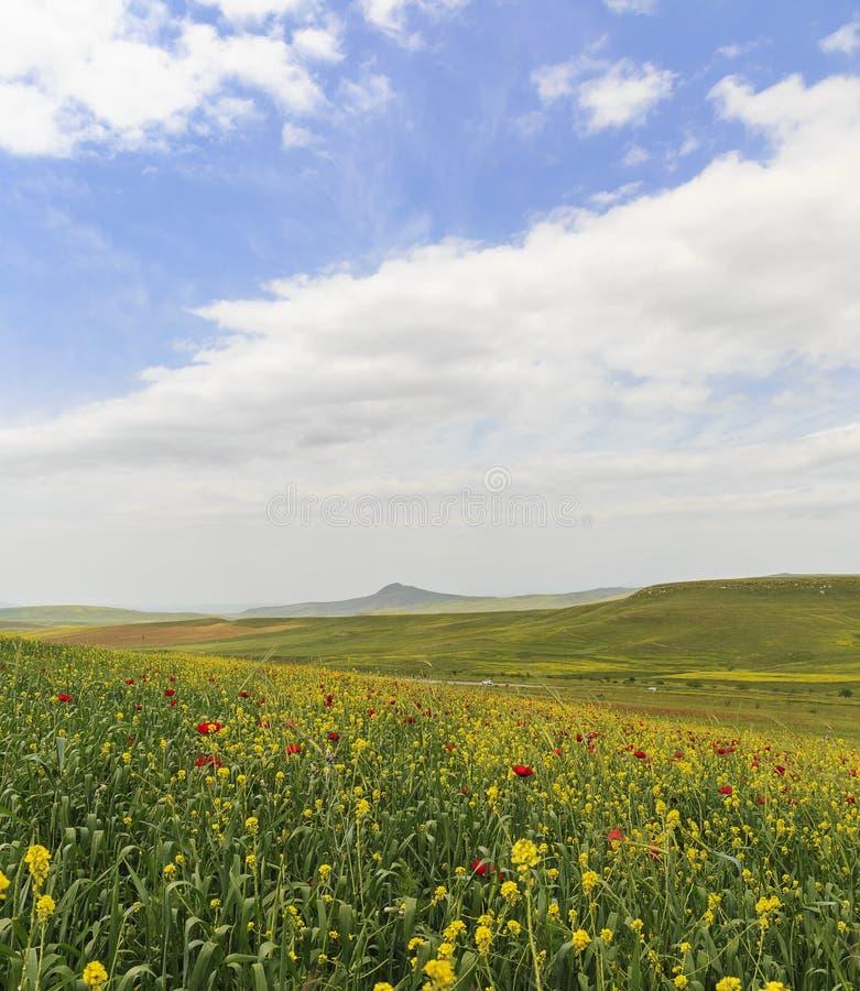 Campo de la amapola azerbaijan imágenes de archivo libres de regalías