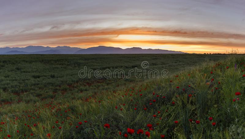 Campo de la amapola en la puesta del sol del día fotos de archivo