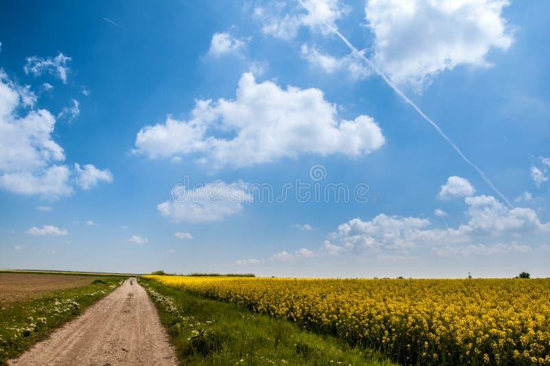 Campo de la colza con el cielo azul imagenes de archivo