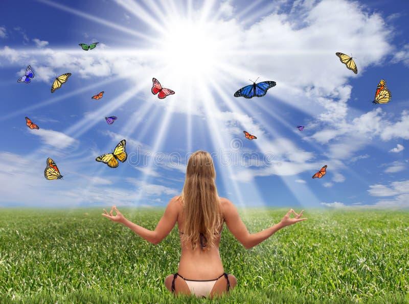 Campo de la fantasía de mariposas y de la luz del sol fotos de archivo