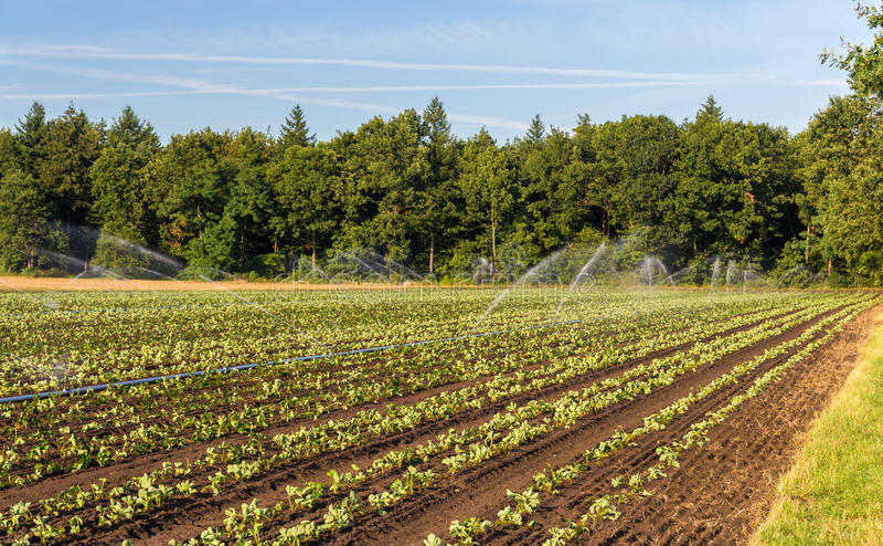 Campo de la fresa con la irrigación en Alemania foto de archivo libre de regalías