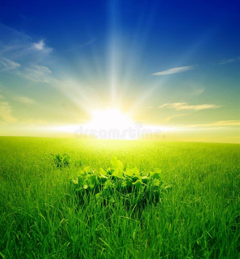 Campo de la hierba verde y del cielo nublado azul imágenes de archivo libres de regalías
