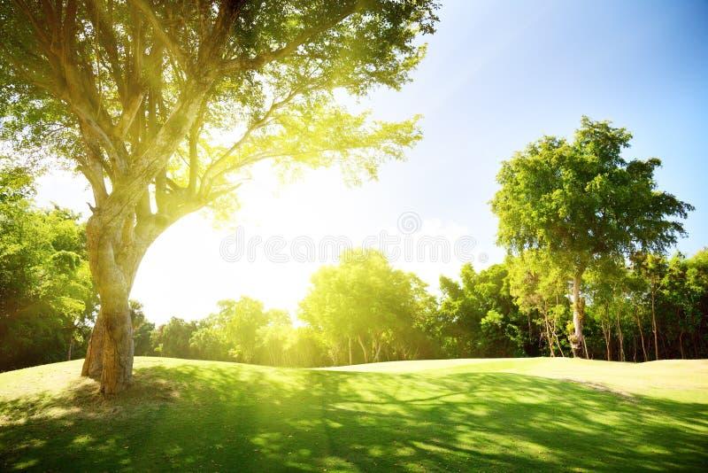 Campo de la hierba y de los árboles foto de archivo