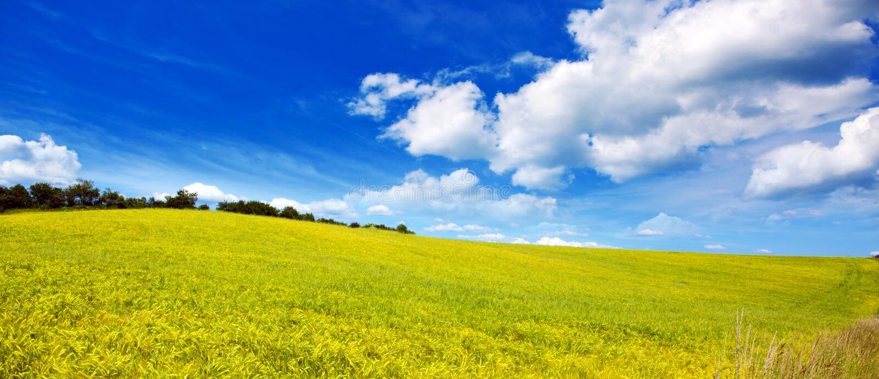 Campo de la hierba y del cielo azul: foto de archivo