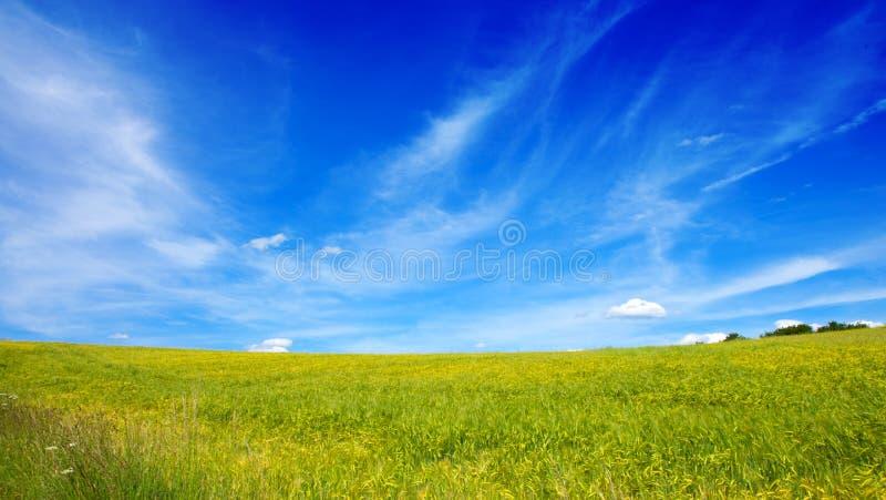 Campo de la hierba y del cielo azul: imágenes de archivo libres de regalías