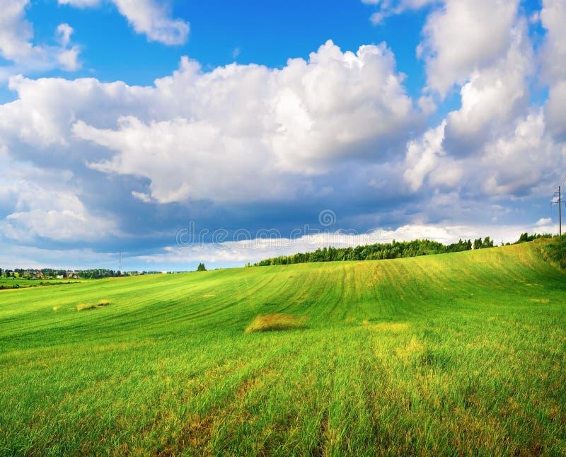 Campo de la hierba y del cielo nublado imagen de archivo