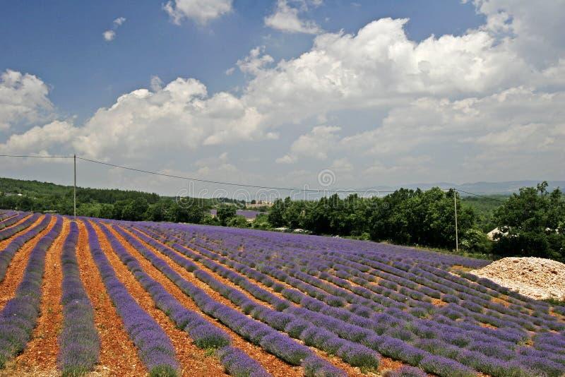 Campo de la lavanda, Provence, Francia imagen de archivo libre de regalías