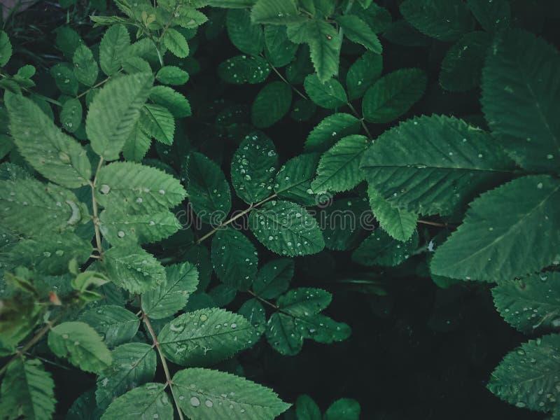 Campo de la mañana del resorte? de la hierba verde y del cielo nublado azul imagenes de archivo