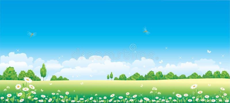 Campo de la manzanilla ilustración del vector
