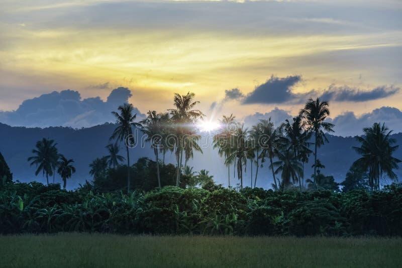 Campo de la paleta del arroz fotografía de archivo libre de regalías