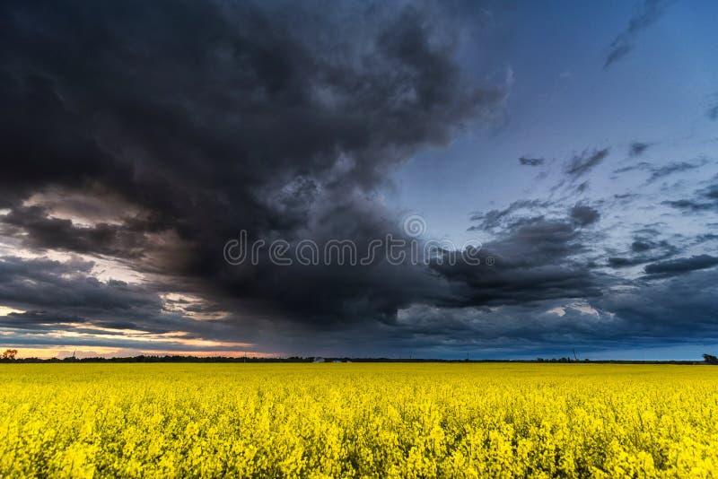 Campo de la rabina con el cielo nublado tempestuoso en fondo imagenes de archivo