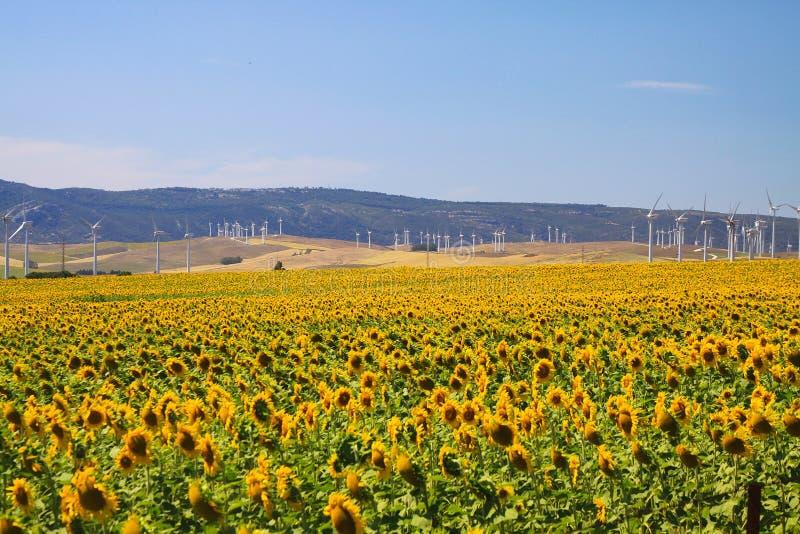Campo de la turbina del girasol y de viento debajo del cielo azul en Andalucía cerca de los pequeños delos Atunes, España de Sáha fotografía de archivo libre de regalías
