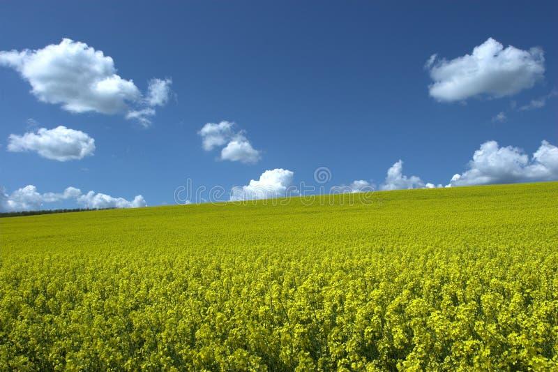 Campo de la violación del petróleo bajo el cielo azul fotografía de archivo