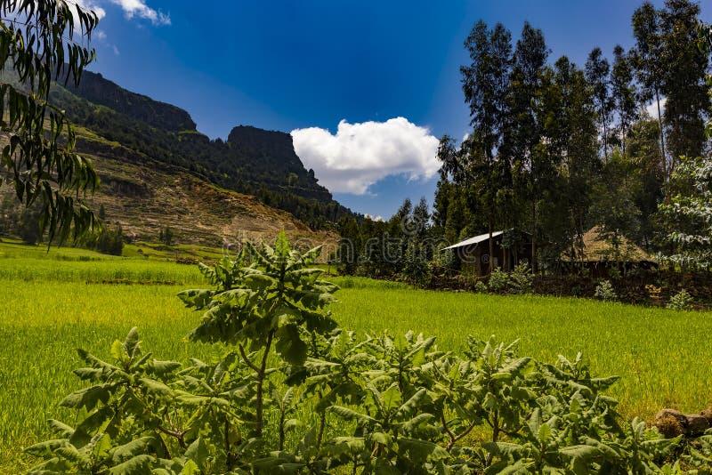 Campo de Lalibela, Etiópia fotografia de stock royalty free